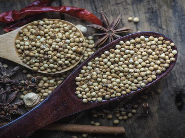 World Sales Export Coriander Seed With Reasonable Price
