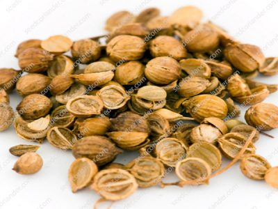 coriander seed supplier & trader