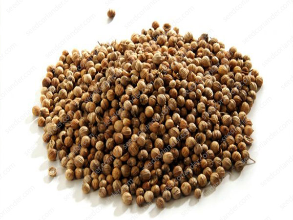 rate dry coriander seeds traders in mandi 2019
