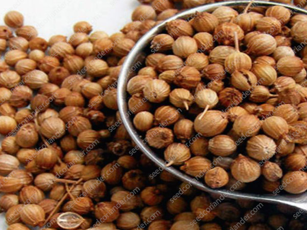 coriander seeds company & manufacturers