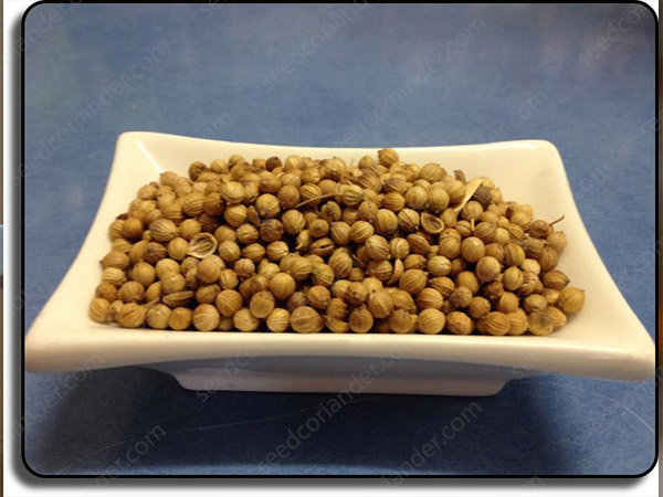 coriander seed exporting