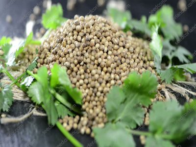 Selling Widely Coriander Seeds