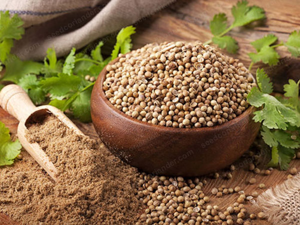 Coriander seed rate in Current price & future prices