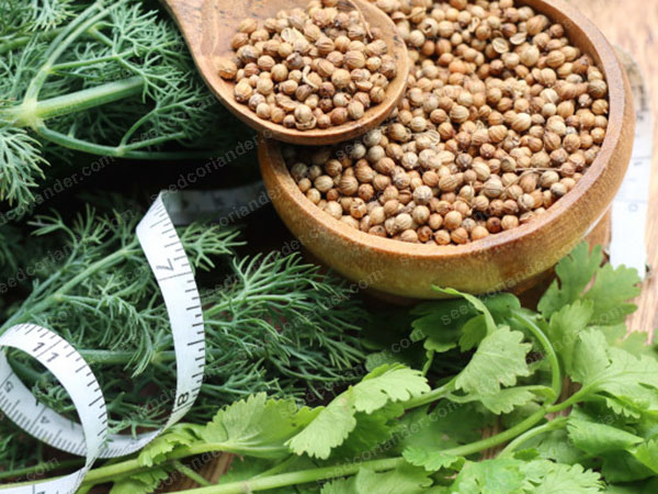 Vietnamese coriander seeds for sale today rate 2019