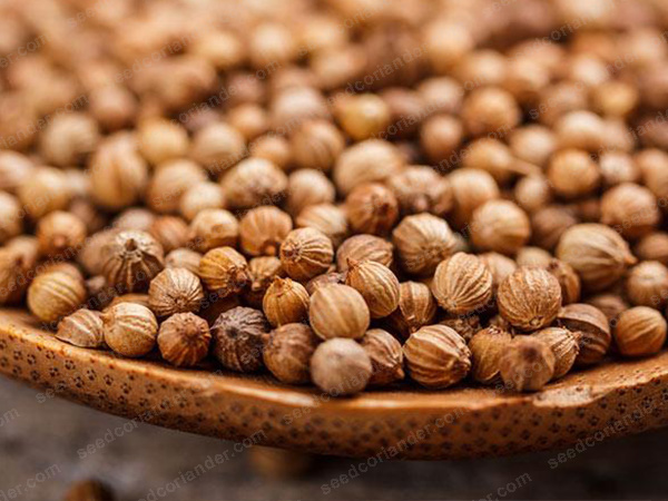coriander seeds suppliers rajasthan to europe & america