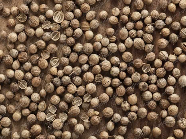 Coriander Seeds at Wholesale rate