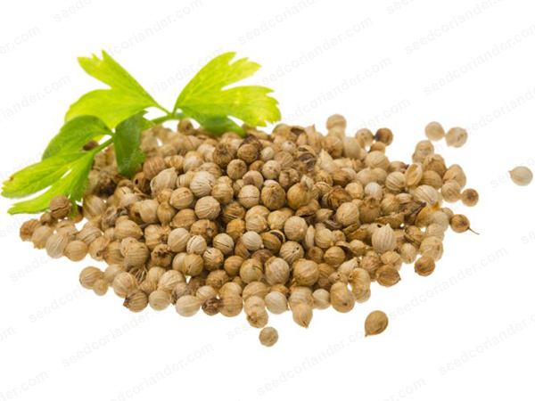 Coriander seeds today market 2019