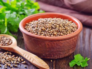 Coriander seeds Suppliers for traders in dubai