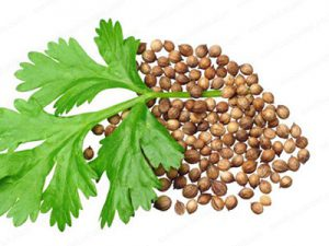 coriander seeds buyers for make excellent powder in malaysia
