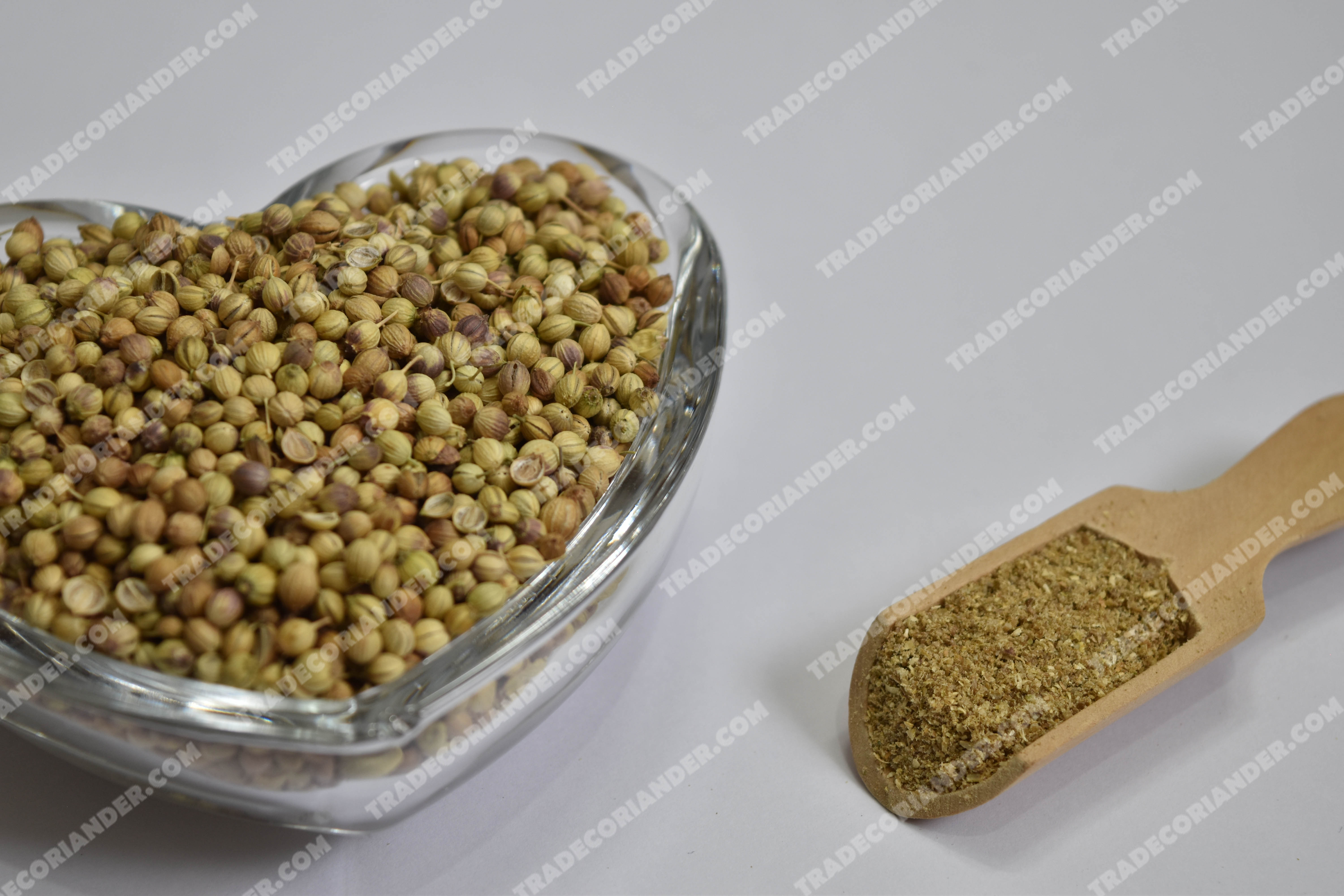 How can I Find Wholesalers of Coriander seed Spice?