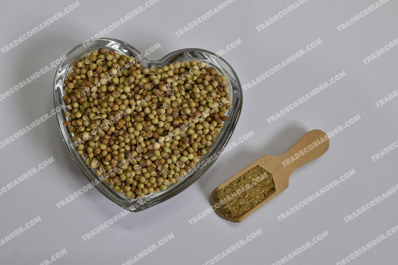 Who can becomes a good coriander seed trader?