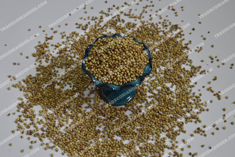 Is growing coriander seed good for all people?