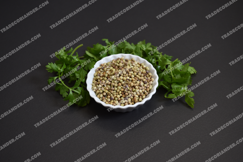 How to Know About Coriander seeds market rate daily?