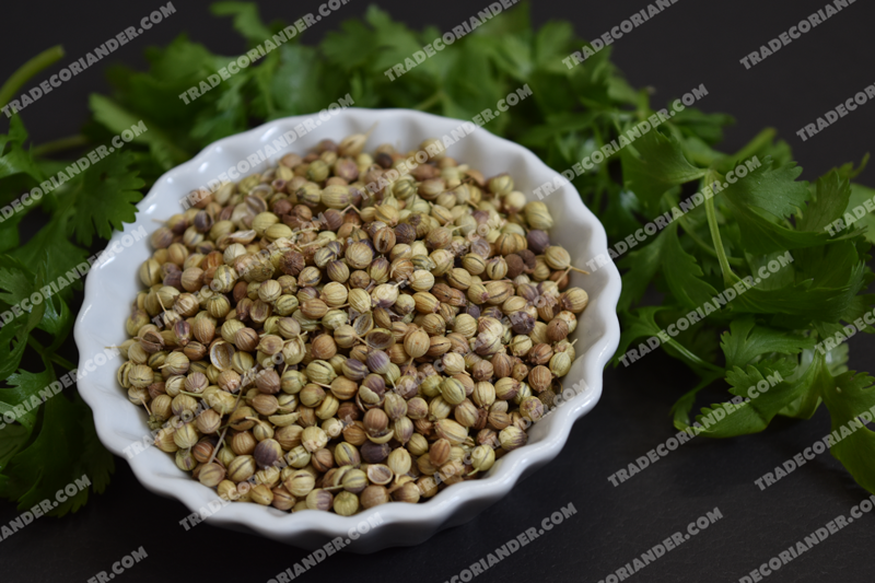 How much is the fresh coriander seed rate today?