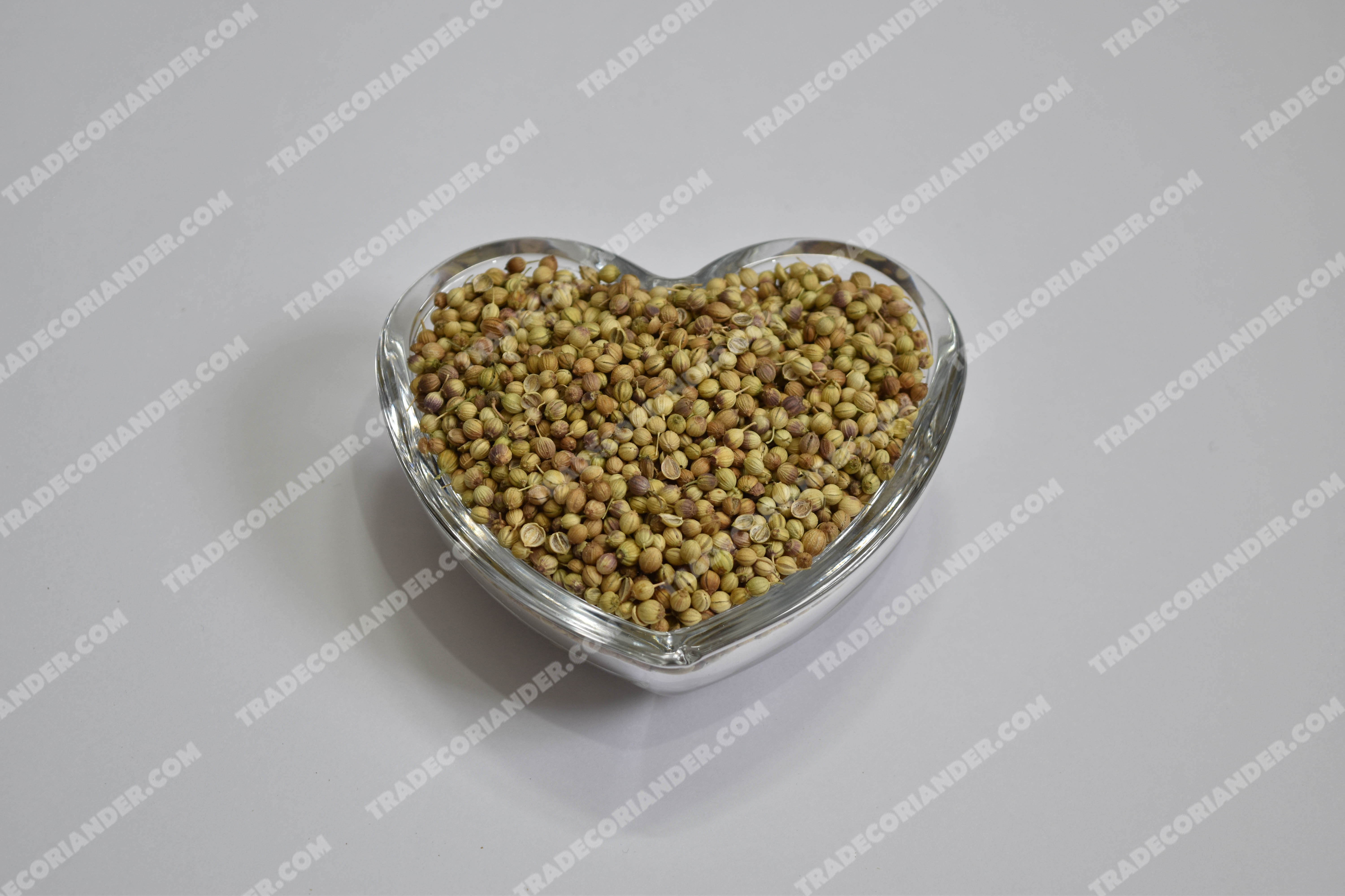 Is the Latest Coriander seed rate cheaper than before?