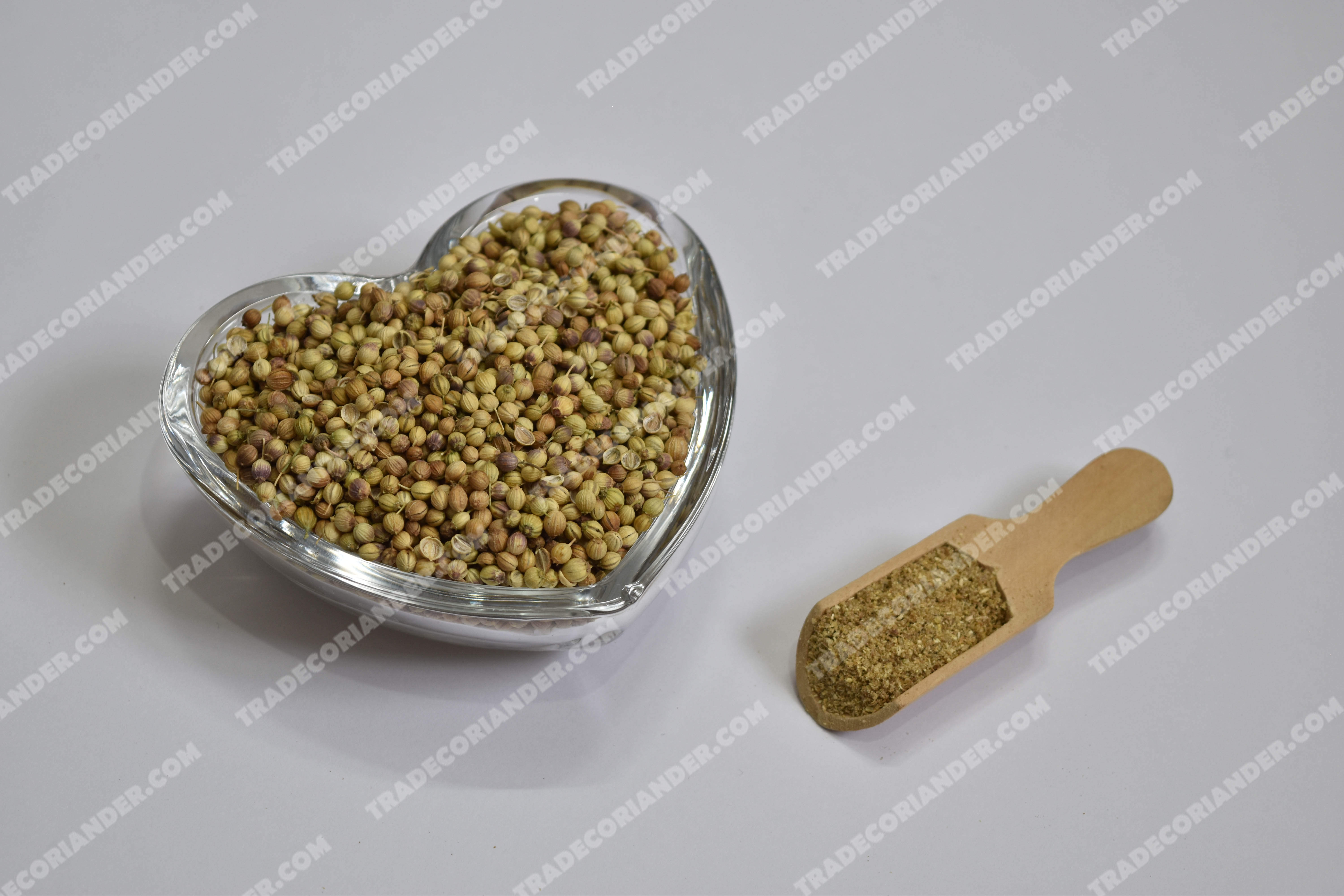 Which country has cheapest coriander seed price today?