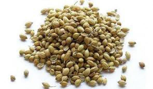 Coriander seed flavor for all cuisines