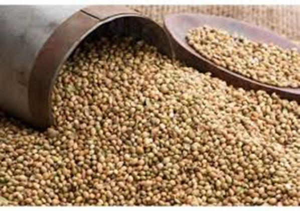 Is coriander seed rate constant?