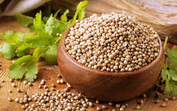 coriander seeds suppliers in india & usa & Rusia