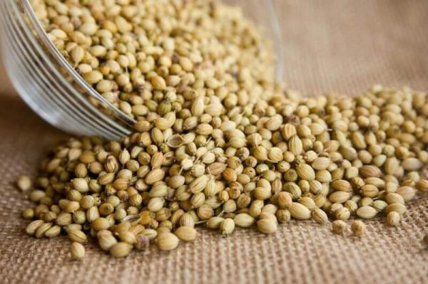 coriander exporting countries